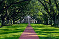 oak alley plantation, vacherie louisiana, mississippi river, historic, trees, cival war, southern live oak