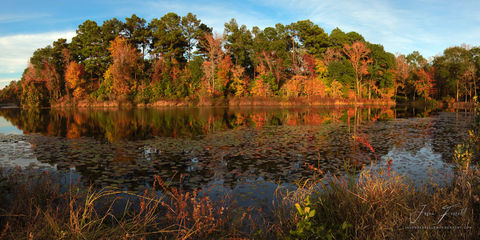 east texas, mirror, reflection, forest, trees, color,  autumn,  leaves