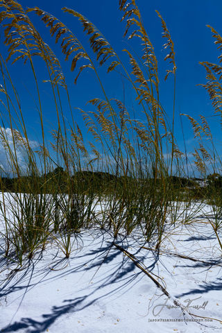 grass, sand dune, beach, water, gulf of mexico, sky, blue, green, white, gulf islands national seashore, santa rosa island