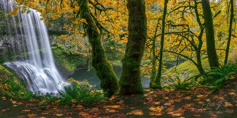 silver falls state park, oregon, autumn dream, waterfall
