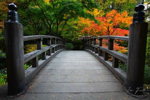 beckon, portland japanese garden, oregon, fall colors, moon bridge