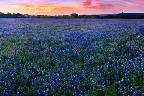 field of bluebonnets, texas hill country, highways, spring