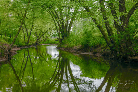 green river, bayou la nana, nacogdoches, texas, reflection, trees, stream,