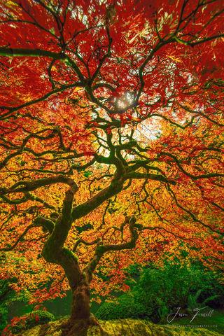 lightning strike, tree, portland japanese garden, oregon