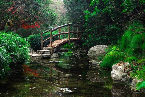brook, austin, texas, zilker botanical garden, colorado river