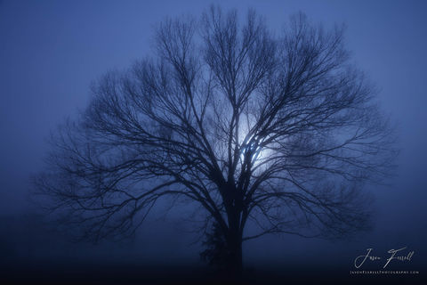 fog, oak, tree, silhouette, texas, backlit, blue, morning, mist, the light shines in the darkness