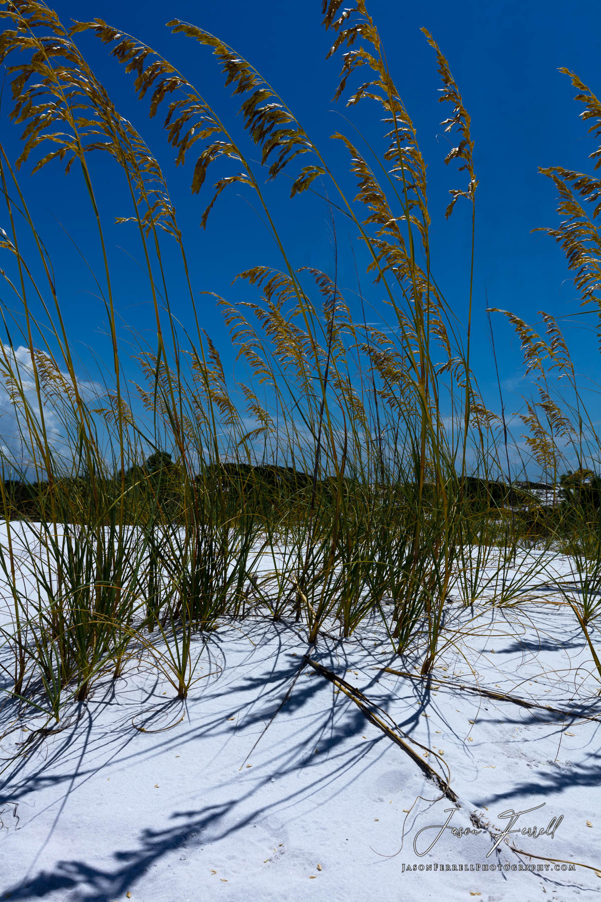 A soothing yet striking image of tall grass casting its shadow under the midday sun on a sand dune.