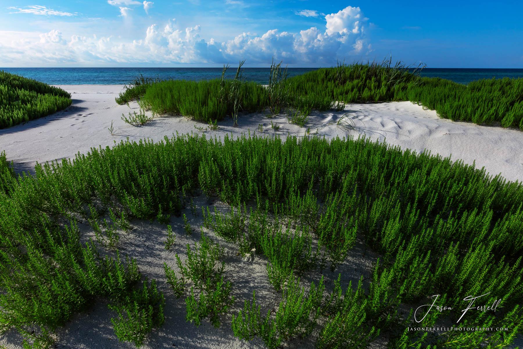 grass, sand dune, beach, water, gulf of mexico, sky, blue, green, white, gulf islands national seashore, santa rosa island, photo