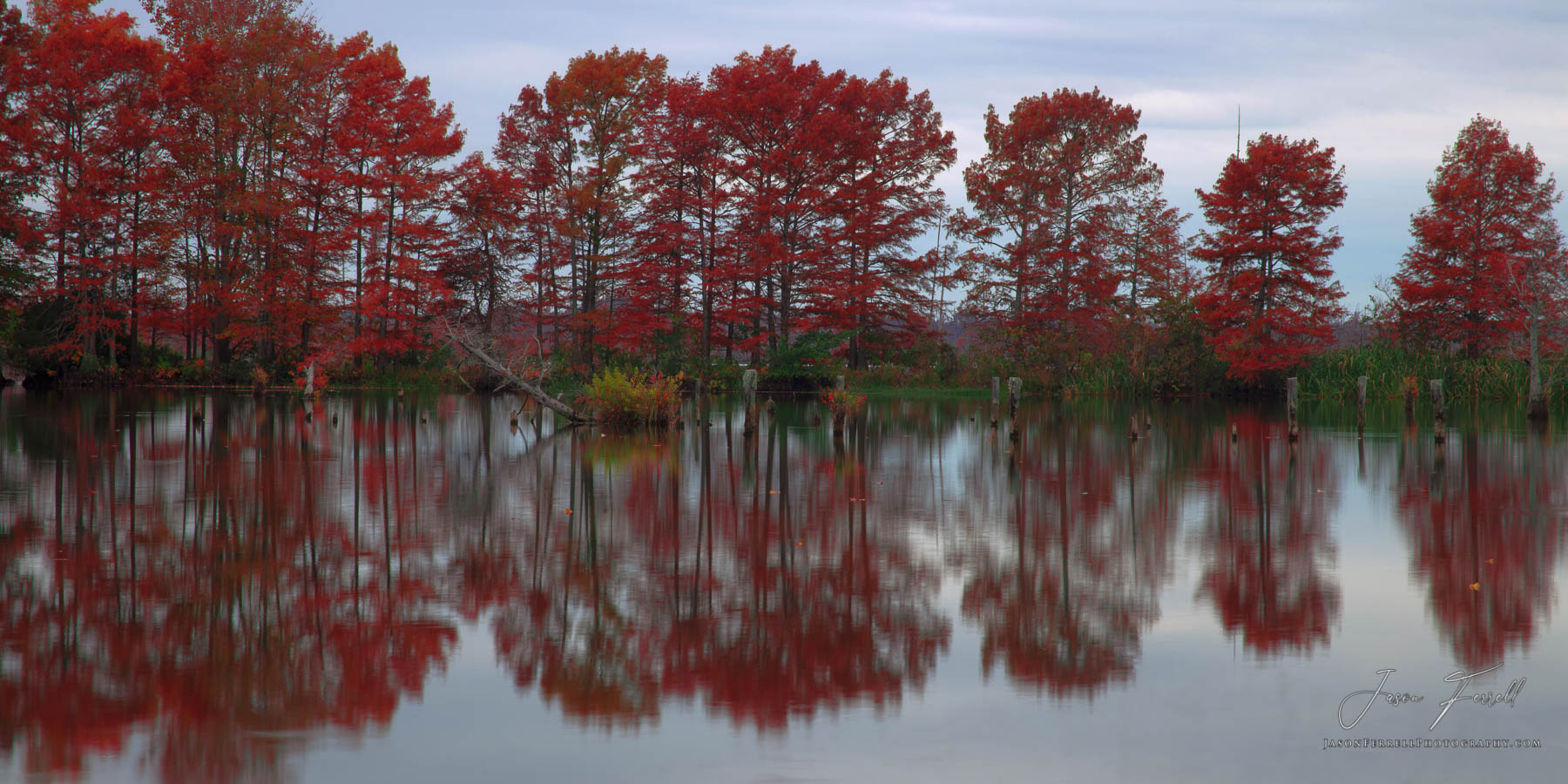 Bald Cypress trees reflected on a quiet calm morning.  The day before I took this shot the heavy winds, sunny blue skies and...
