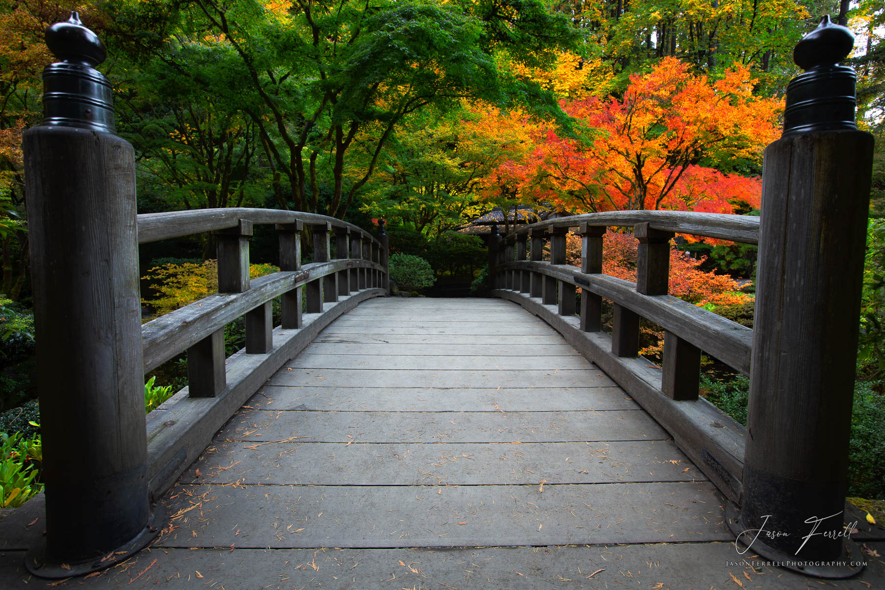 beckon, portland japanese garden, oregon, fall colors, moon bridge, photo