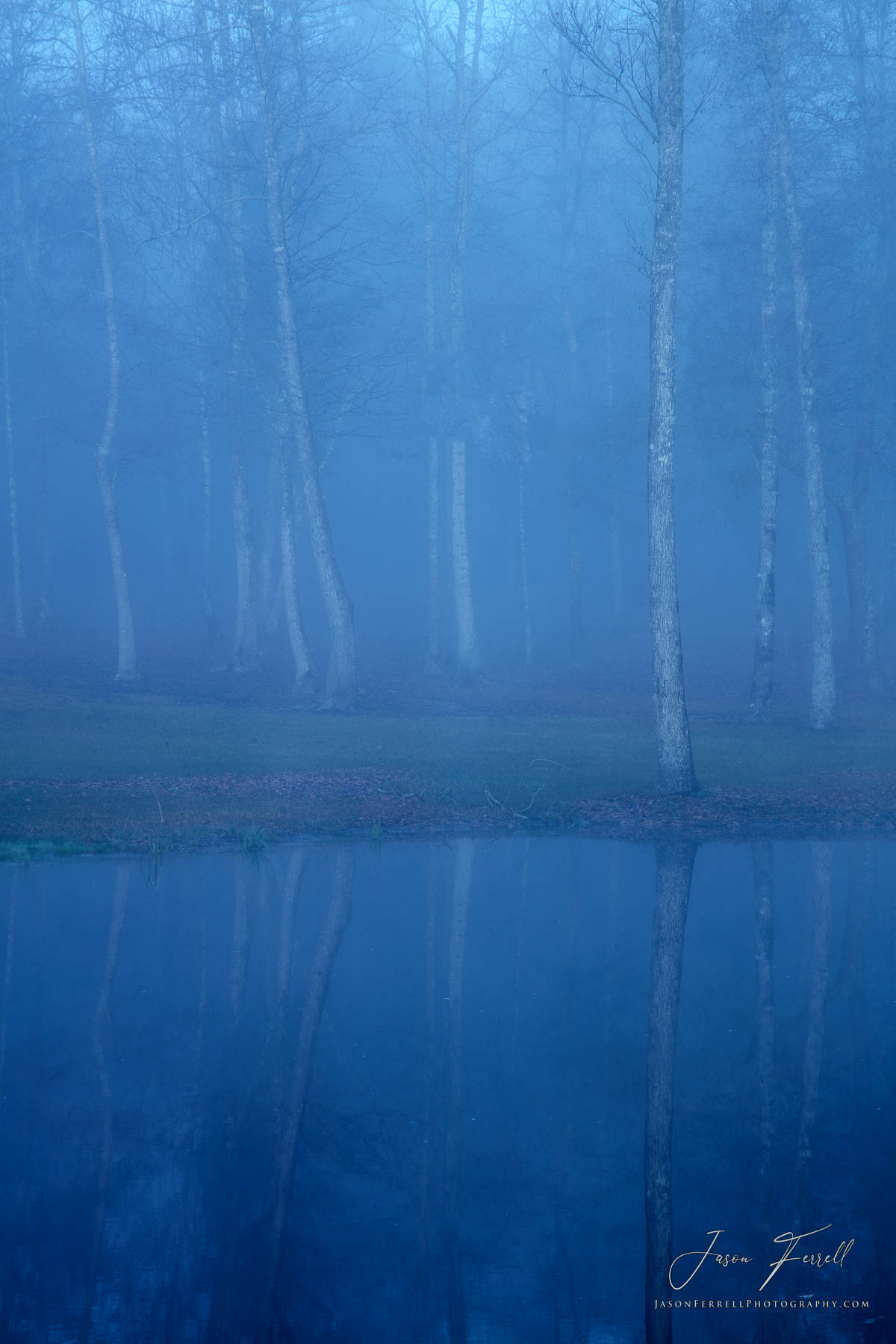 ethereal forest, cherokee county, texas, fog, trees, forest, morning, light, mirrored reflection, photo