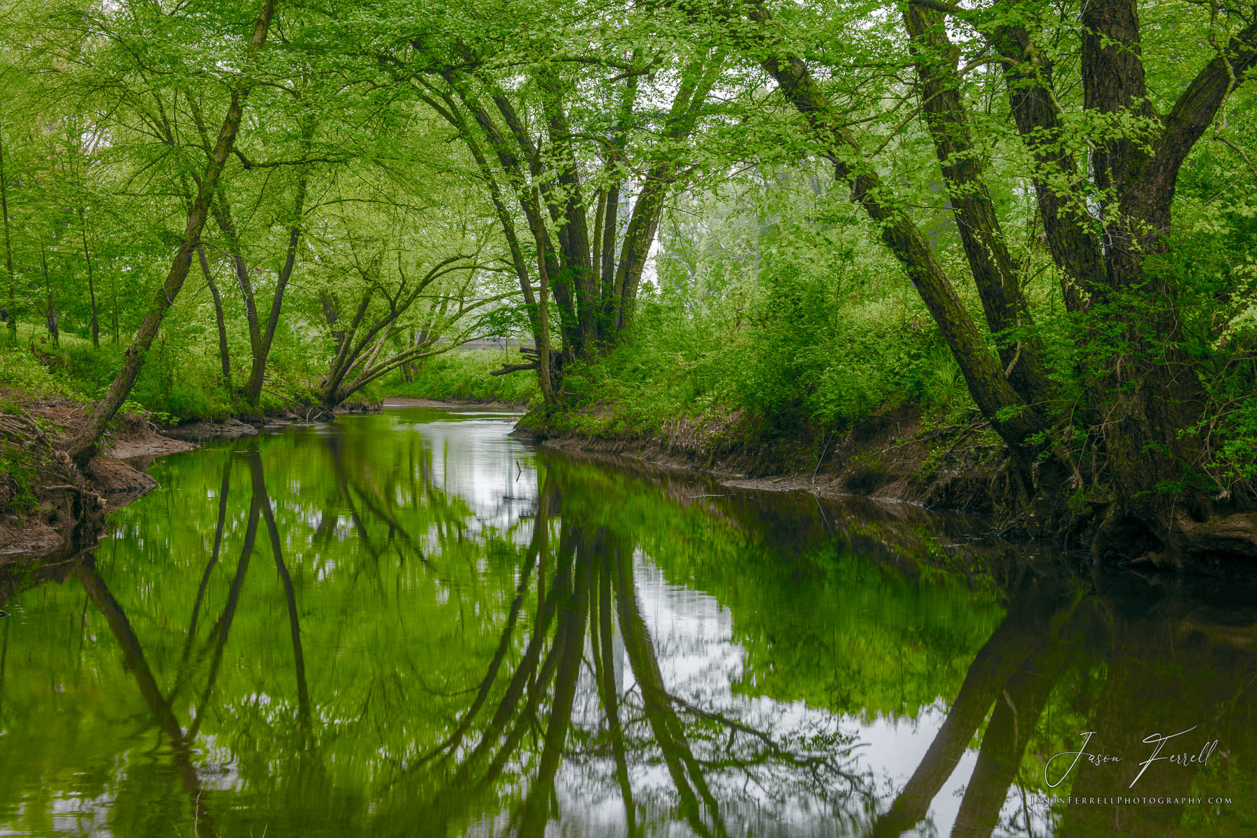 green river, bayou la nana, nacogdoches, texas, reflection, trees, stream, , photo