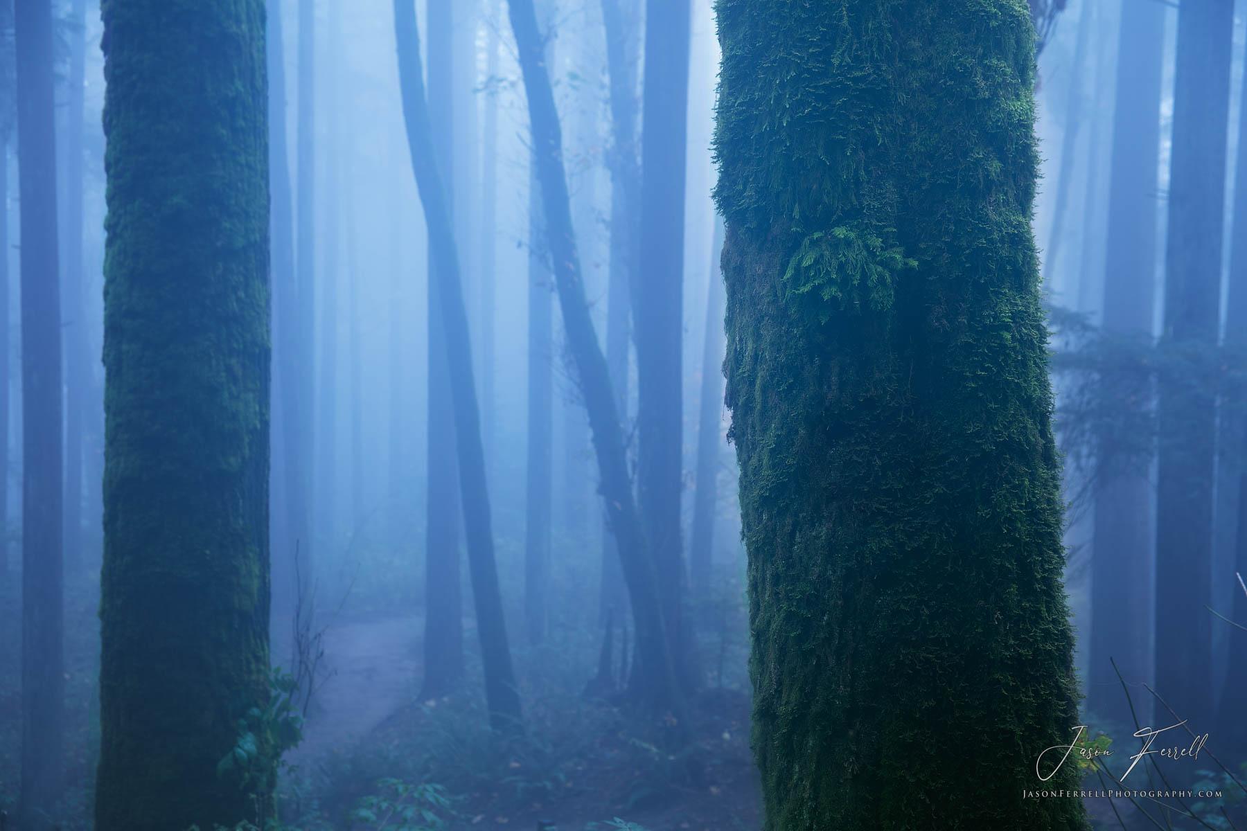 mystic forest, portland, oregon, photo