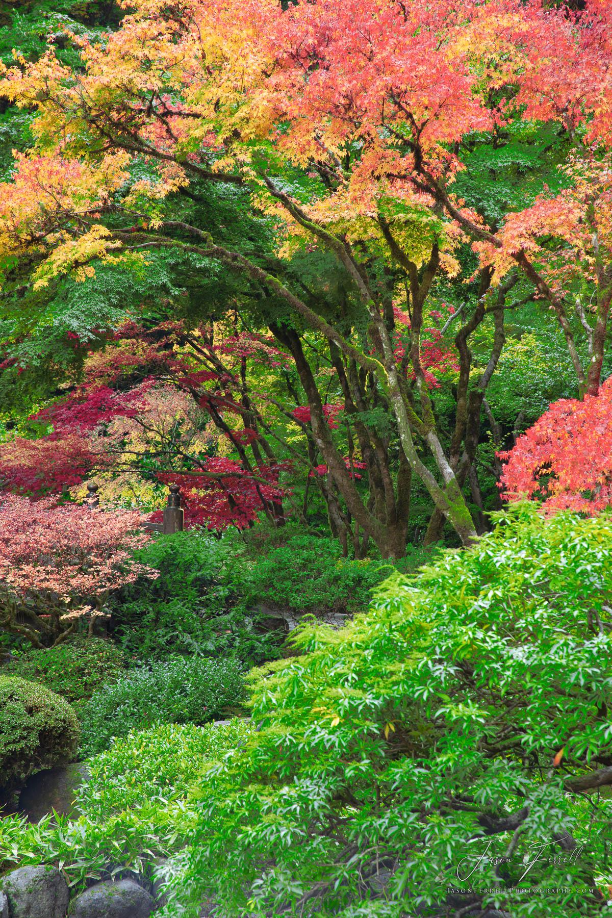 pastels, portland japanese garden, oregon, color, photo