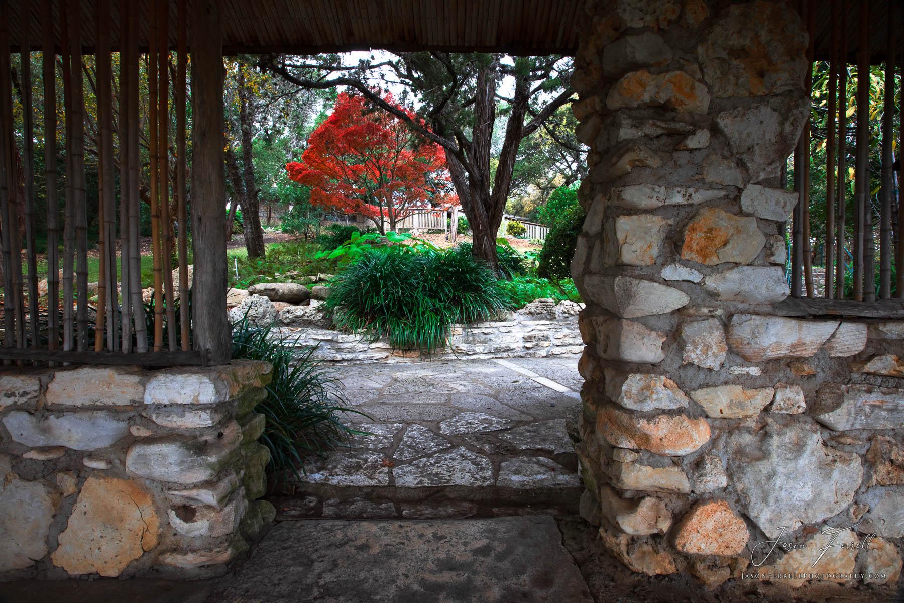ponder, austin, texas, zilker botanical garden, japanese maple tree, photo